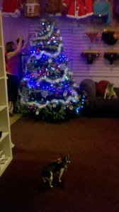 Our Christmas tree at Naughty or Nice