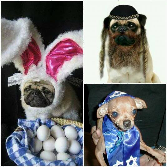Pug & Chihuahua Passover & Easter Pic